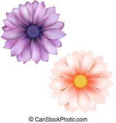 Lilac And Pink Gerber