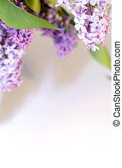 Lilac as frame