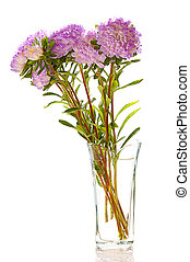 lilac asters in glass vase