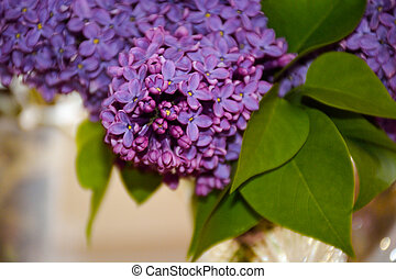 lilac background  flower