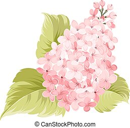 Lilac blossom. Blossom branch of pink lilac flowers. Lilac tree. Beautiful pink lilac blossom flowers. Lilac isolated over white.Greeting or invitation card. Vector illustration