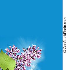 Lilac branch on a background of blue sky with clouds