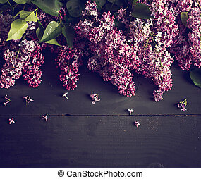 lilac branch on a black background.