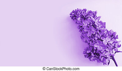lilac branch on a colored background