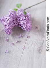 lilac branch on a light background