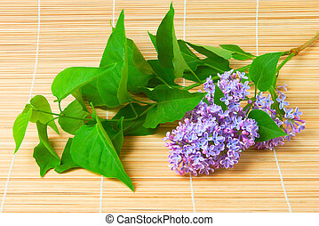 Lilac branch on bamboo background