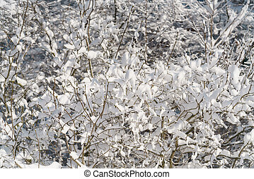 lilac branches covered with snow in morning