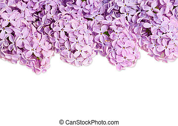 Lilac bush background