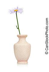 Lilac chamomile
