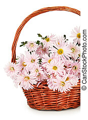 Lilac chrysanthemums in basket on white background