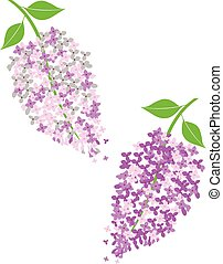lilac - vector lilac flowers
