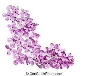 Lilac Corner