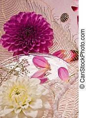 lilac dahlia