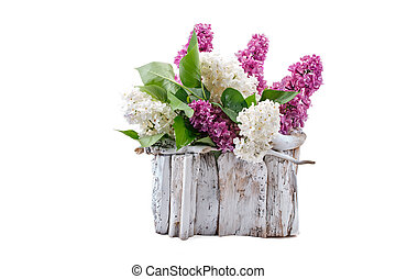Lilac different colors with leaves is in a white wooden basket.