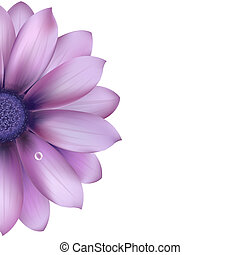Lilac Flower, Isolated On White Background, Vector...