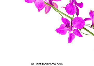 Lilac flower on a gray background