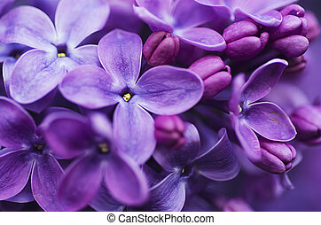 Lilac flowers background - Macro image of spring lilac ...