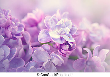 Lilac flowers bunch violet art design background