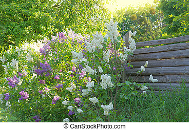 Lilac flowers near wooden fence