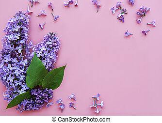 Lilac flowers on a pink background - Branches and flowers of...