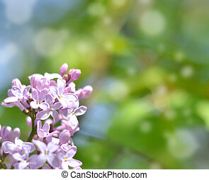 Lilac flowers with bokeh background