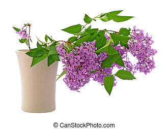 Lilac in vase isolated on white