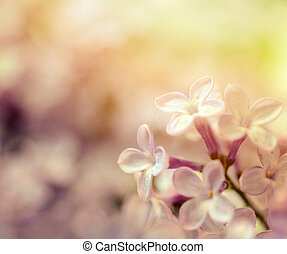 Lilac macro shot
