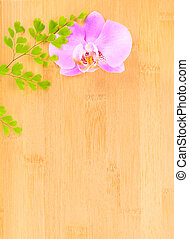 lilac  orchid and green branch on bamboo  background