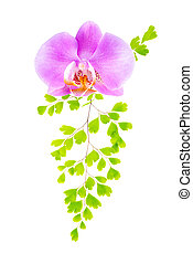 lilac orchid and green fern isolated on the white background