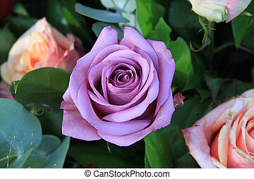 Lilac rose in close up