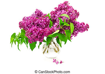 Lilacs in a glass vase isolated on white background.