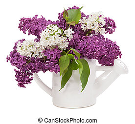 Lilacs in a jar isolated on white background
