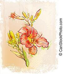 lilia, czerwony, style., rocznik wina, ilustracja