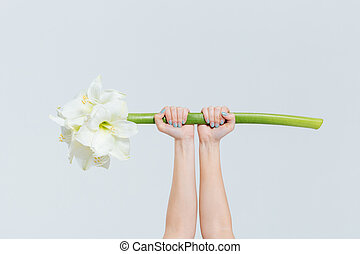 lilia, samica, dzierżawa wręcza