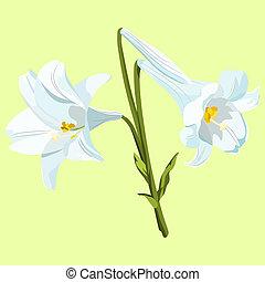 lilie, bukiet, wielkanoc, trzy, tło., zieleń biała, blady