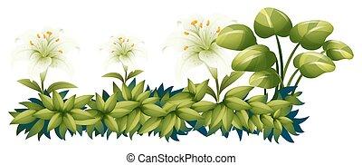 lilie, busch, blumen, grün weiß
