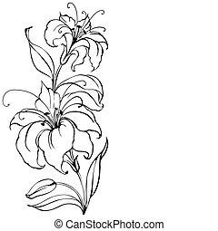 lilie, květ