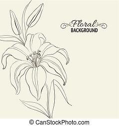 lilie, květ, osamocený, nad, white.