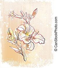 lilie, schäbig, weißes, grobdarstellung, abbildung