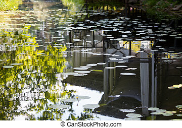 Lilies in the mirrored water of a lake
