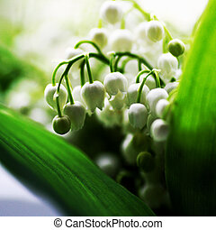 A small bouquet of lilies of the valley with white flowers and green leaves.