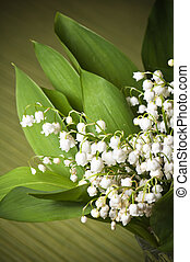 Lilies of the valley, close up