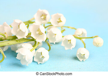 lilies of the valley on a blue wooden background