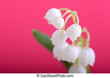 lilies of the valley on a red background close up
