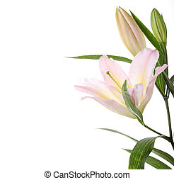 Lilies - spa concept