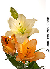 Lilies - Lilie flowers on a white background