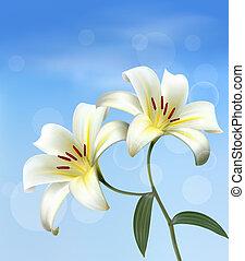 lilies., tło, dwa, vector., biały, święto