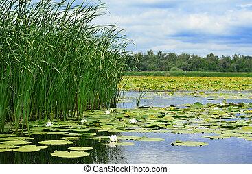 liliomok, sétabot, tó