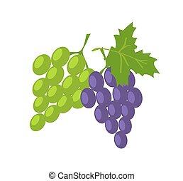 lilla, uva, due, verde, frutte, fresco, sorts