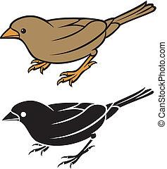 lille, -, fugl, spurv